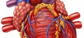 أبحاث علمية تخصصت لدراسة قلب المرأة في فرنسا